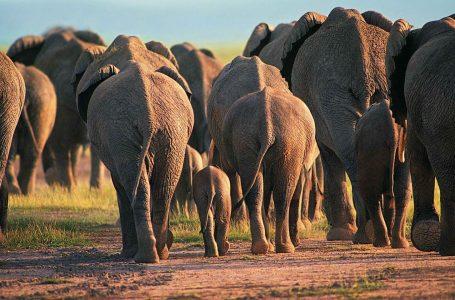L'ambiente, gli animali selvatici e la disumanità stupida