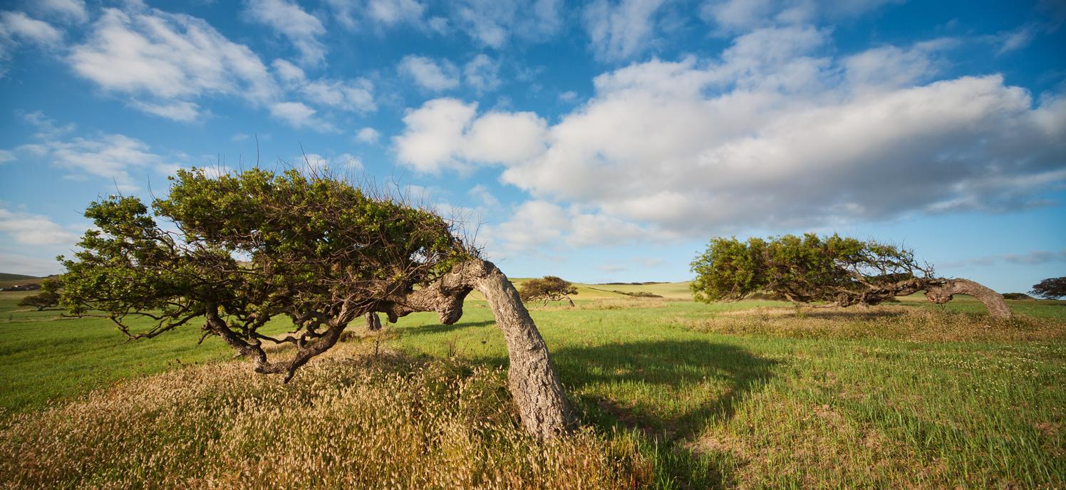 Querce di sardegna il vento e faber for Alberi simili alle querce