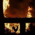 """alt=""""Inferno Grecia, Atene tra le fiamme"""""""