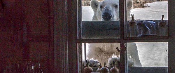 """ALT=""""La Terra di Francesco Giuseppe che è russa ma è regno dell'orso"""""""