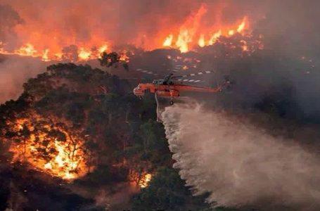 Australia, fuga dall'inferno e dai cambiamenti climatici negati