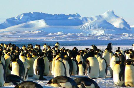 Antartico, plastica e rifiuti chimici. Greenpeace lancia l'allarme