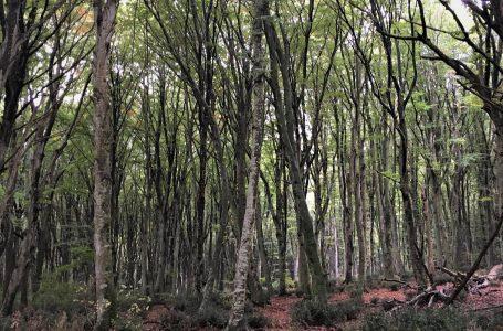 I boschi della montagna sacra e chi li distrugge
