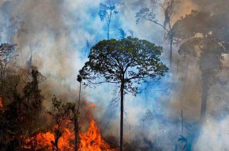 Anno nero non solo Covid: devastati 8.500 chilometri quadrati di foreste