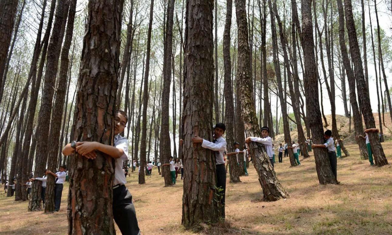 Lo sradicamento degli alberi e del nostro abitare